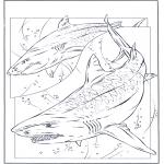 Раскраски с животными - Акулы