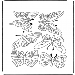 Раскраски с животными - Бабочки 1