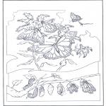 Раскраски с животными - Бабочки 2