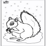 Раскраски с животными - Белка 5