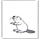 Раскраски с животными - Бобер