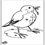 Раскраски с животными - Чёрный дрозд