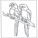 Раскраски с животными - Два попугая Ара