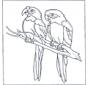Два попугая Ара
