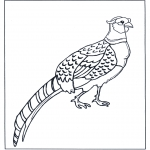 Раскраски с животными - Фазан