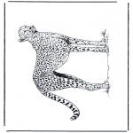 Раскраски с животными - Гепард 2