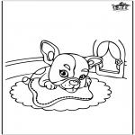 Раскраски с животными - губка Боб на скейтборде