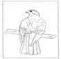 Хищная птица на ветке
