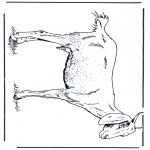 Раскраски с животными - Козел