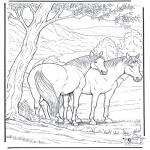 Раскраски с животными - Лошадь 6