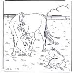 Раскраски с животными - Лошадь и жеребенок