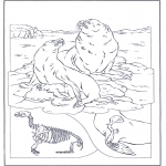 Раскраски с животными - Морские львы