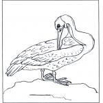 Раскраски с животными - Пеликан