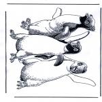Раскраски с животными - Пингвин 1