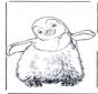 Пингвин 3
