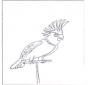 Попугай 4