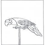 Раскраски с животными - Попугай 3