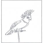 Раскраски с животными - Попугай 4