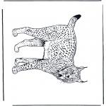 Раскраски с животными - Рысь