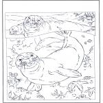 Раскраски с животными - Тюлени