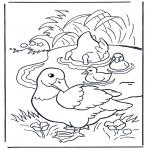 Раскраски с животными - Утки