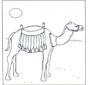 Верблюд на солнце