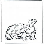 Раскраски с животными - Земная черепаха