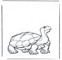 Земная черепаха
