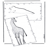 Раскраски с животными - Жираф и тюлень